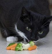 Домашние животные будут объявлены вне закона