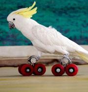 Птичья олимпиада покорила мир. Фото