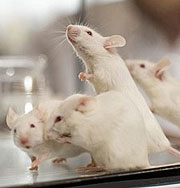 В Белом доме завелась мышь