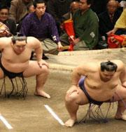 Сумо станет самым скандальным видом спорта