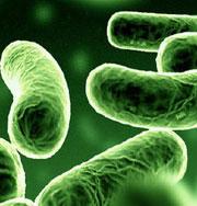 Разлитую нефть поедают бактерии