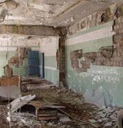 Растения адаптировались к Чернобылю