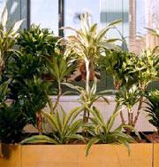 Домашние растения: выбираем по гороскопу