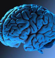 Офисная работа иссушает мозг
