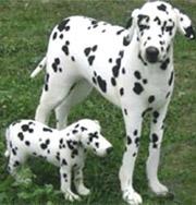 На ЕВРО 2012 в футбол будут играть собаки