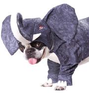 Хэллоуин для собак. Фото