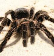 Ребенка укусил паук, живший в упаковке семечек