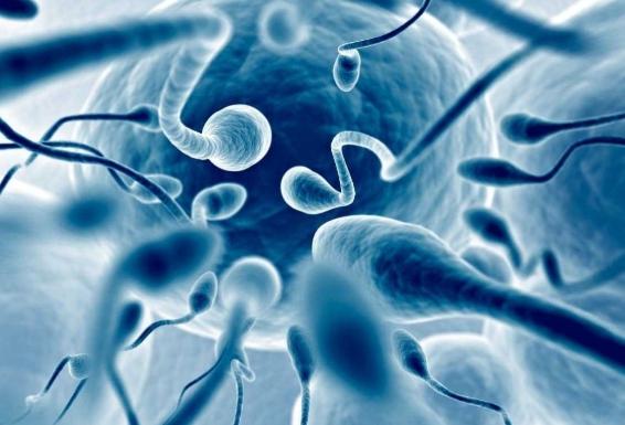 Чем выше качество спермы — тем ниже иммунитет
