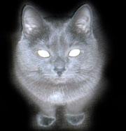 Кошка застряла в сливе раковины