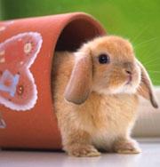 Кролик возомнил себя курицей