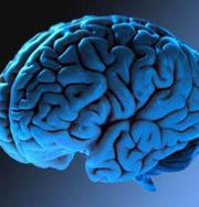 На аукционе появились человеческие мозги