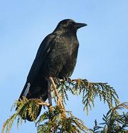 Наблюдение за птицами спасает от депрессии