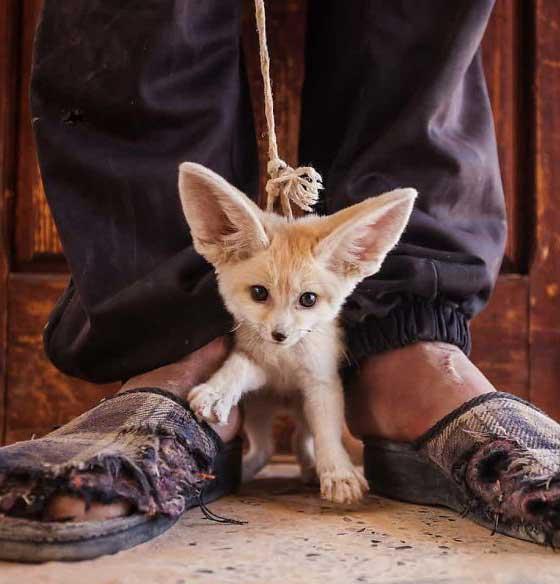 Фотографии в защиту дикой природы, которые хватают за душу. Фото