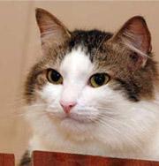 Кошки защищают детей от астмы