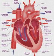Проблемы сердца связаны со щитовидной железой