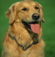 Собаки действительно спасают от стресса