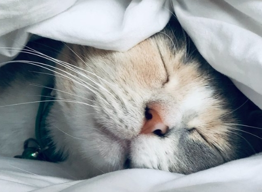 Разные звуки влияют на сон по разному