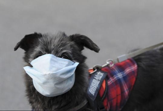 Возможно ли заразиться коронавирусом от кошки или собаки?