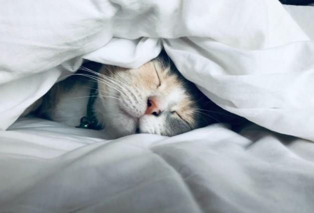 Как правильно спать днем?